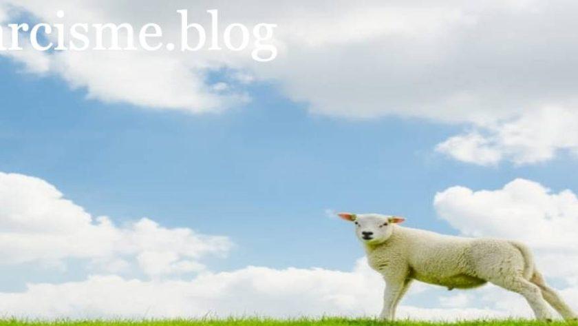 een schaap op het gras voor narcisme.blog