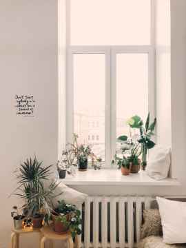 photo of green leaf potted plants on window and stand, huishouden, huishouding
