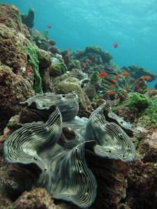 Choosing an Underwater Camera - Canon IXUS - Giant clam