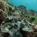 Choosing an Underwater Camera - Canon IXUS - Giant clam
