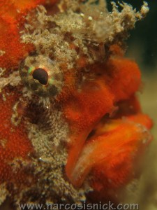Choosing an Underwater Camera - G15 - Frogfish