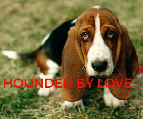 HOUNDED BY LOVE