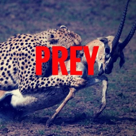 PREY-3