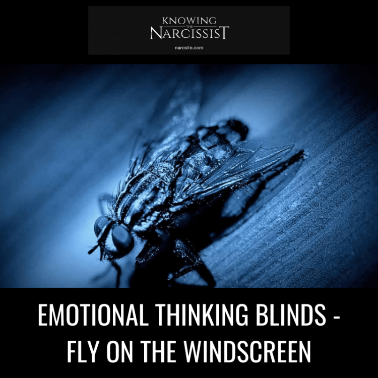 EMOTIONAL-THINKING-BLINDS-FLY-ON-THE-WINDSCREEN