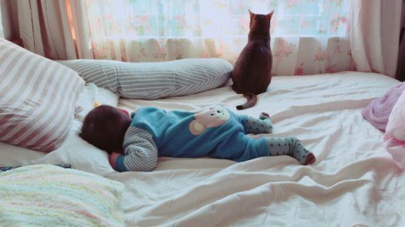 猫と赤ちゃんの同居