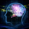 脳の老化を防ぐ3要素