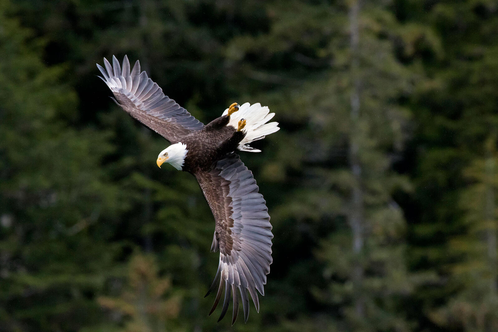 Forest Service Remove Roadless Protections for Tongass National Forest
