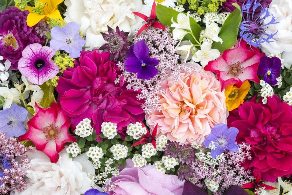 ZAŠTO UVEK RUŽE? Pet vrsta cveća koje takođe izražavaju ljubav 1