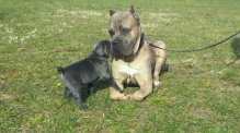 Oak and a pup