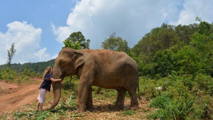 Elephant-Land