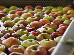 Doerrwerk Apfelwäsche
