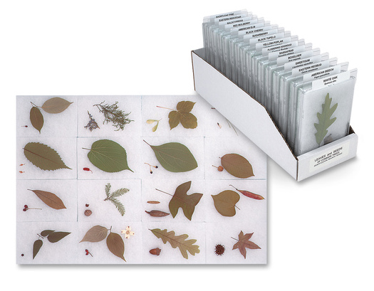 Leaves and Seeds of Common Trees Identification Mounts