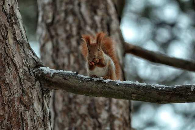 В Днепре белочки в зимнем лесу очаровали весь город (Фото). Новости Днепра
