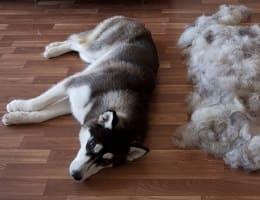 Собачья шерсть для лечения шпора на пятках