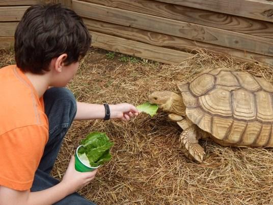 Harmony Safari Park - Tortise Feeding