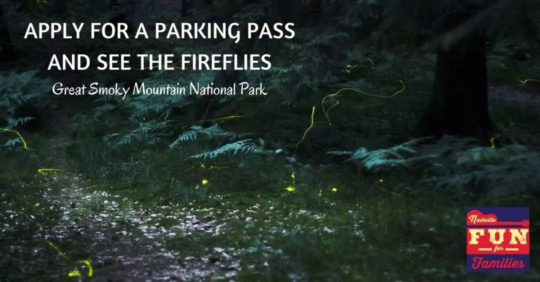 See the Fireflies this Summer in the Great Smoky Mountains