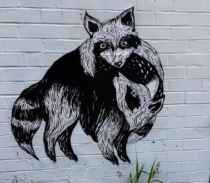 Raccoon sticker art street art Nashville