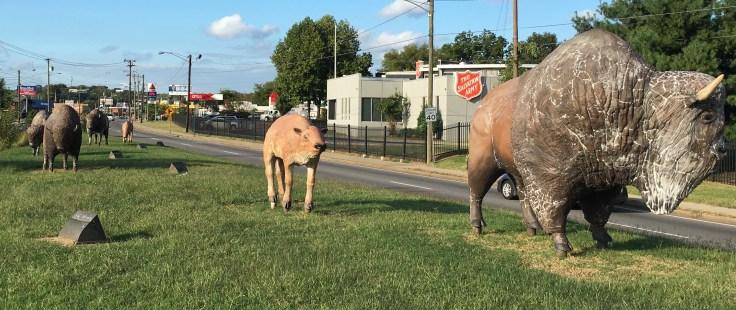 Buffalo statues street art Nashville