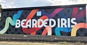 Bearded Iris Mural street art Nashville