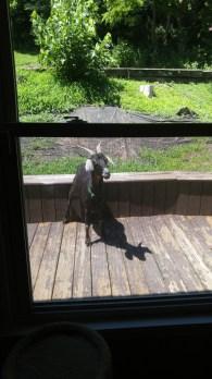 Petal on the patio
