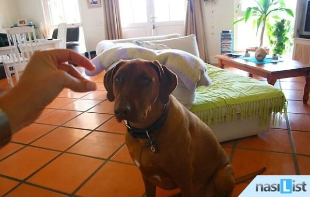 evde köpek bakımı