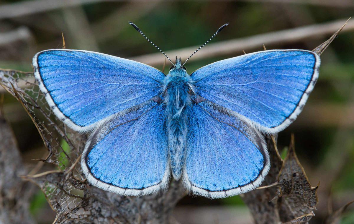 butterfly-symmetry