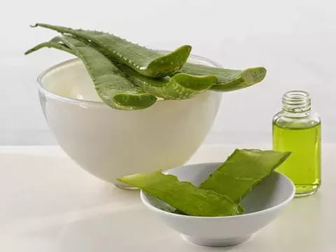 Каланхоэ – полезные и лечебные свойства для здоровья и противопоказания. Каланхоэ применение в косметологии, гинекологии, народной медицине для взрослых и детей: рецепты