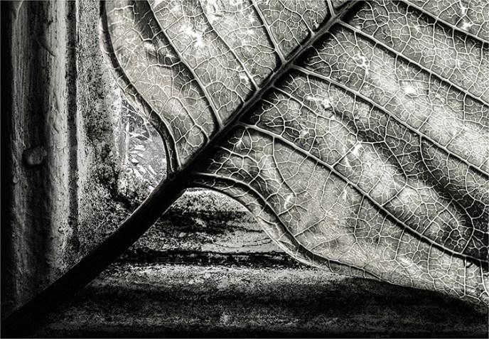 MaryJo Pellegrino - Leaf Me Alone - BW Salon IOM