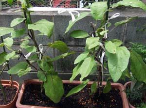 nasu-planter001
