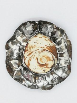 skamieniała muszla