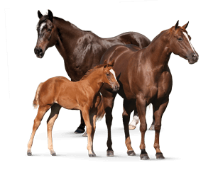 horse lifestage any life stage