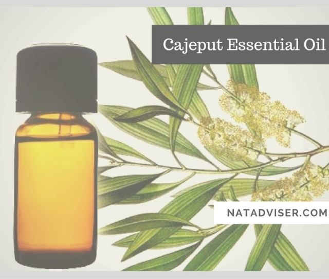 Health Benefits Of Cajeput Essential Oil Useful Tips And Natural Recipes