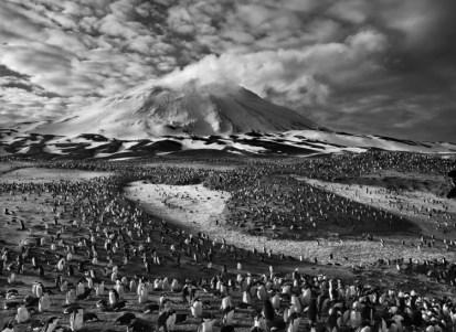Islas Sandwich, 2009 | Esta isla con su volcán activo alberga unas 750.000 parejas de pingüinos Yugular.