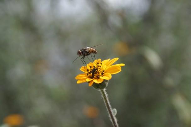 Complicidad._ Algunas de las especies florales, se complementan con los insectos y se ayudan de manera mutua. Capturando escenas espléndidas del vinculo entre la fauna y la flora.