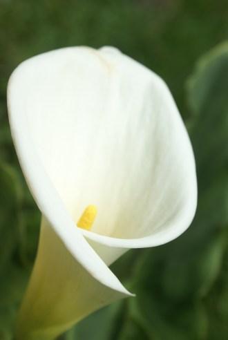 Pureza._ Las flores blancas envuelven la atención de los observadores por la paz que estas transmiten.