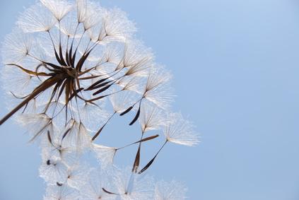 pelusa polen