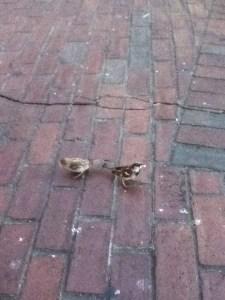 birds on brick walkway