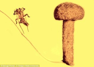50_Million_YearOld_Insect