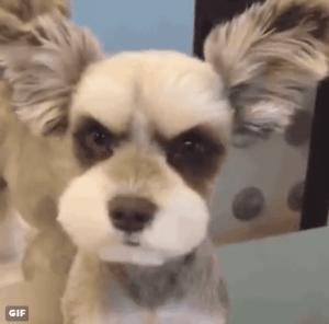 cutest-dog