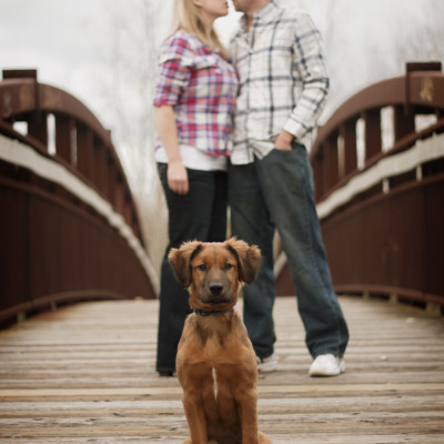 engagement photos with dog - Ann Arbor, Ypsilanti, Belleville, Chelsea, Dexter, Whoitmore Lake, Pinckney, Brighton, South Lyon, Howell, Jackson, Lansing and Detroit area photographer