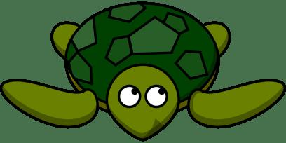 turtle-310825