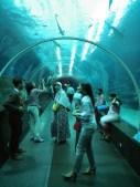 Melewati lorong di bawah Sea Sharks