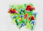 Poppies and cornflowers. Watercolor painting