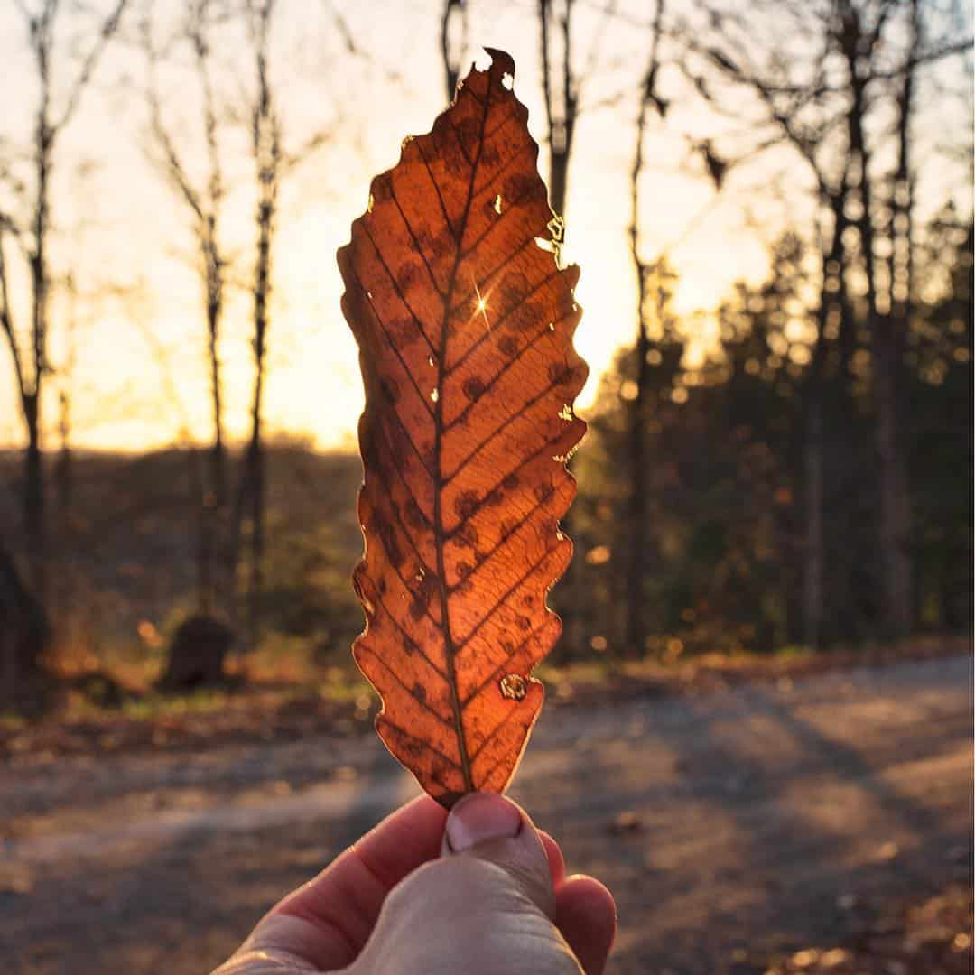 leaf sunset