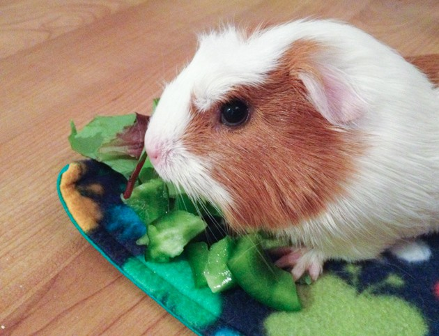tiki with veggies