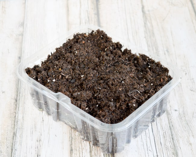 fill container with soil for microgreensfill container with soil for microgreens