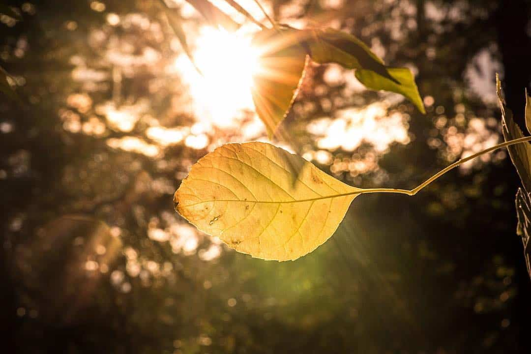 backlit leaves