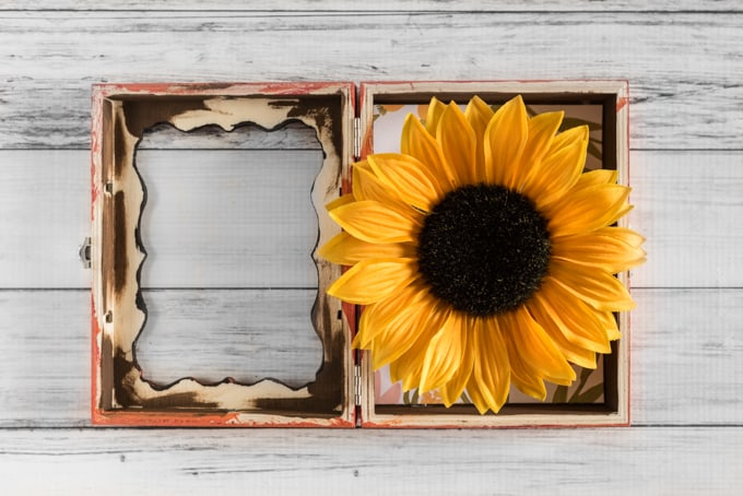 fit-the-flower-head-in-box