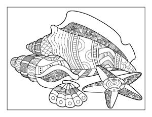 seashell-coloring-page