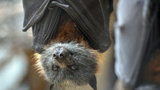 cute bat hanging up side down